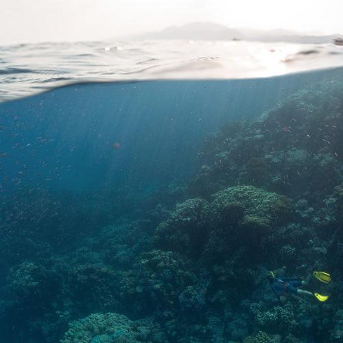 ayada-maldives-diving