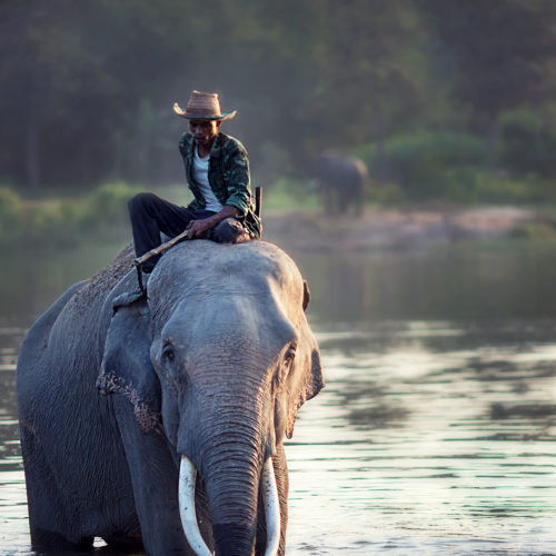 greaves_temple_tiger_resort_elephant