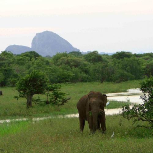 noel-rodrigos-leopard-safaris-elephant