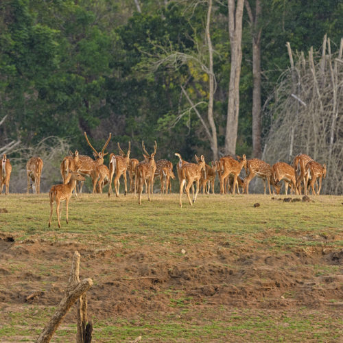 kabini national park